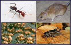 Reeves Pest Control Midlothian Dallas Texas